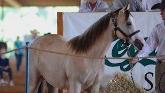 legacy-reining-breeders-sale