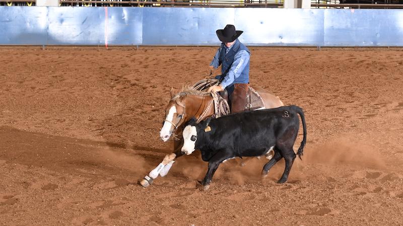 stock-horse-world-show-champion-seven-s-woodrow