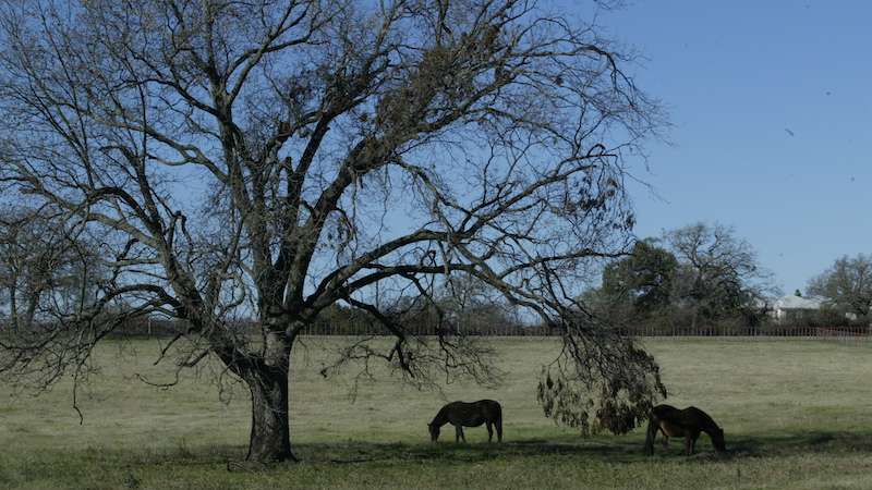broodmares-in-trees