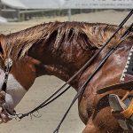 paint-reining-horse
