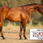 profit-equine-online-sales-topper-the-sinner