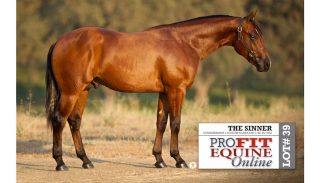 profit-equine-online-sales-topper-the-sinner