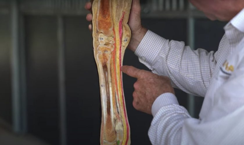 Dr Steve Allday explaining the functions of an equine joint