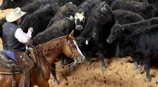 horse-walking-through-cows