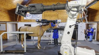 equine-research-project-new-bolton