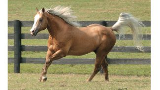 nu-chex-to-cash-at-hilldale-farm