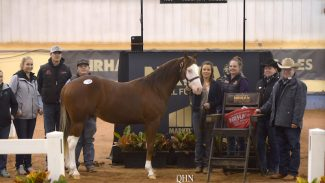 nrha-futurity-sales-shiners-topgun