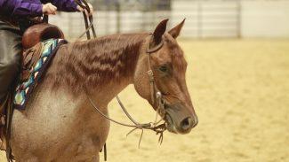 ncha-cutting-horse