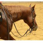 cutting-horse-walking