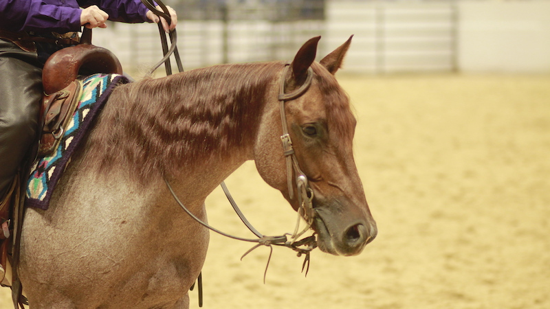 ncha-cutting-horse