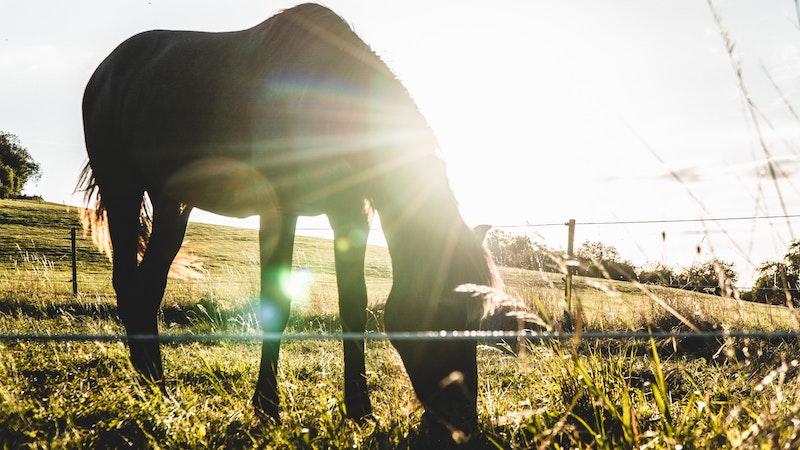 horse-grazing-sunlight