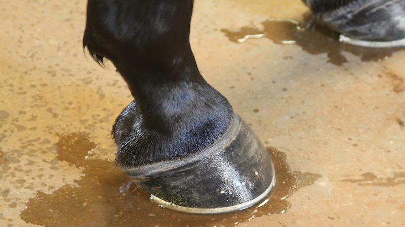 horse-hooves