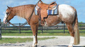 internet-auction-horse-sale