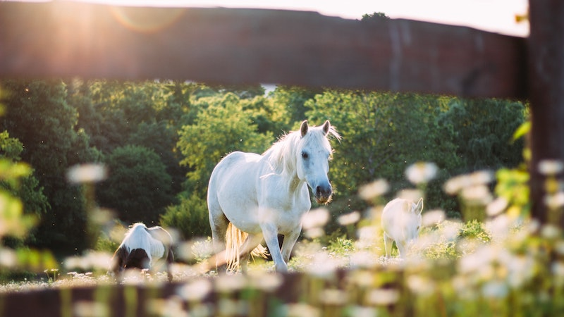 horse-photograph