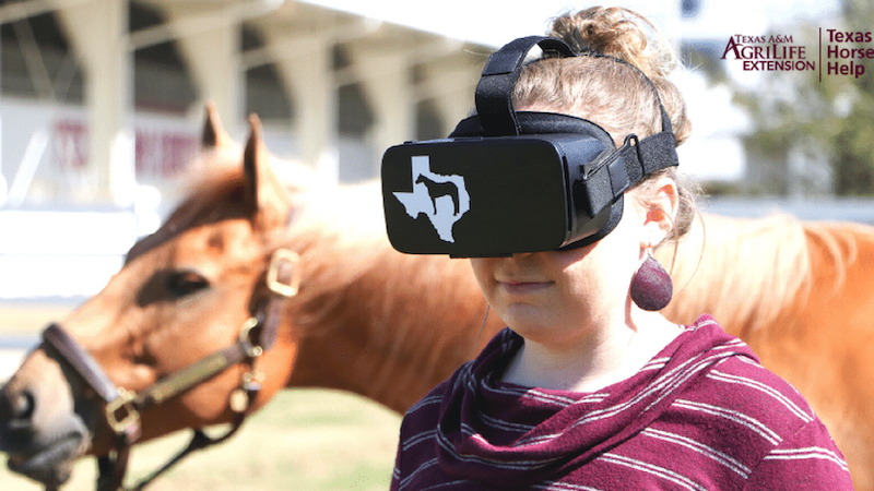 texas-a&m-virtual-reality-horse-judging