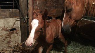 newborn-foal