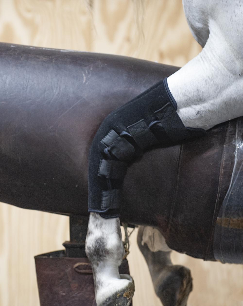 Stallion mounted on block using stud breeding boots