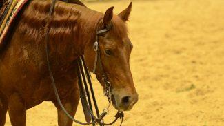cutting-horse-ncha-super-stakes