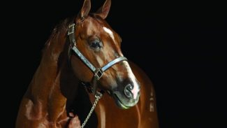 aqha-hall-of-fame-horse-dual-rey