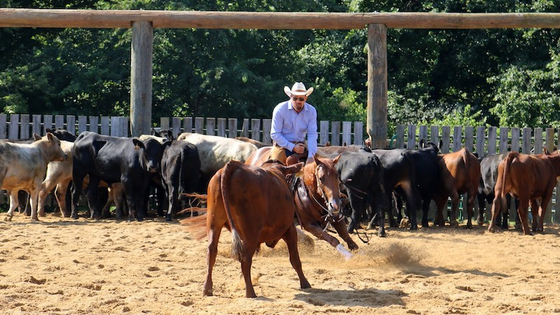 east-coast-stock-horse-association