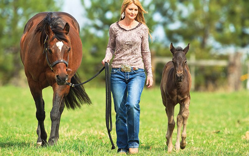 Mare and foal walking