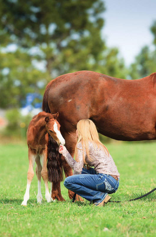 Healthy mare and foal