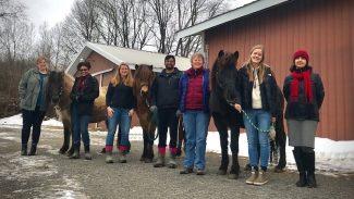 equine-allergies-study
