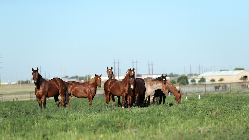 fults-ranch-yearlings