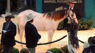 markel-futurity-sales-horse