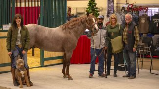 stallion-owner-event-sannman