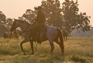 Aaron Ranch rider