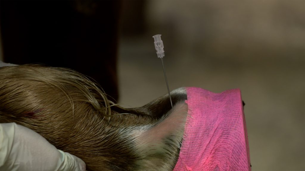 bursa injection — a form of joint therapy for horses