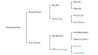 catolena-cashin-in-pedigree