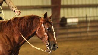 iea-ranch-riding