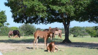 foal-laying-down