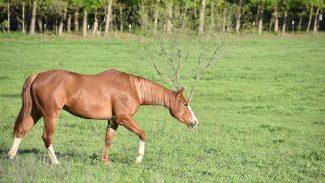 horse-walking
