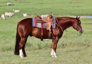 congress-ranch-horse-consignment