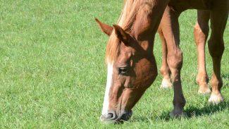 horse-eating